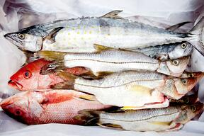 Group of frozen fish - sea food concepts.jpeg